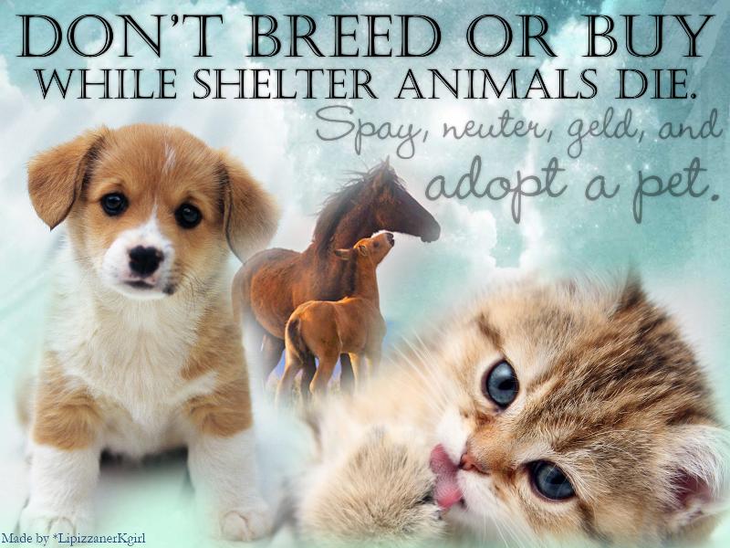 Animal Adoption Banner By Monocerosarts On Deviantart