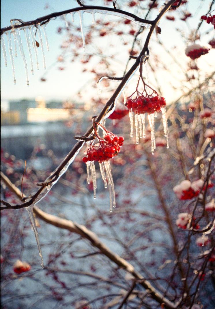 Iceberrie by elhoff