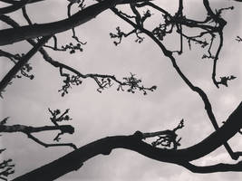 Branches in the Air