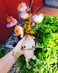 Baby mandrake amigurumi