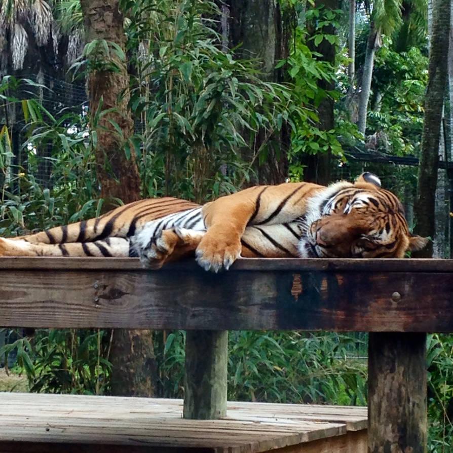 Cat Nap by Fawnan