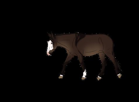 Kahuvaa Donkey Bid 4