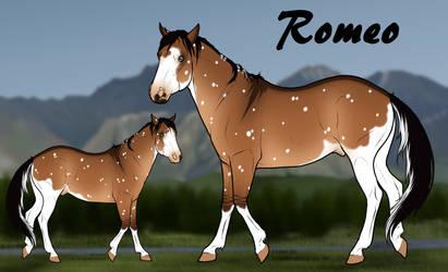 diRPG | Romeo | Lead Stallion