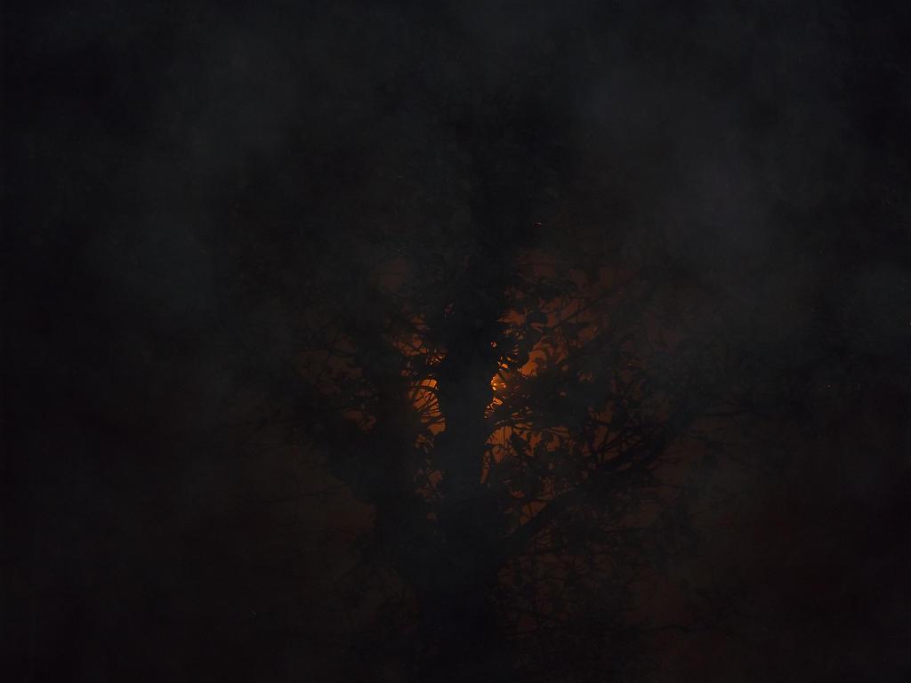 Back-lit Tree by KoreeluStromboli