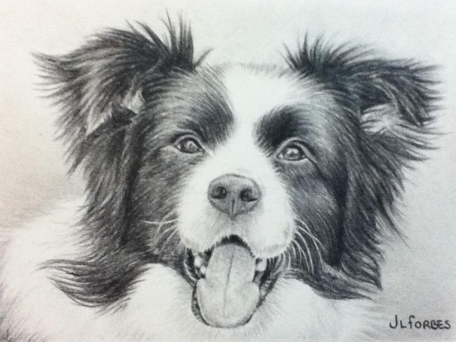 border collie by fazz jo xx