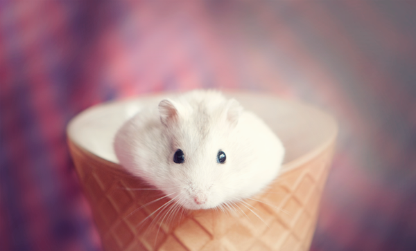 Natsu the Hamster. by Annarigby