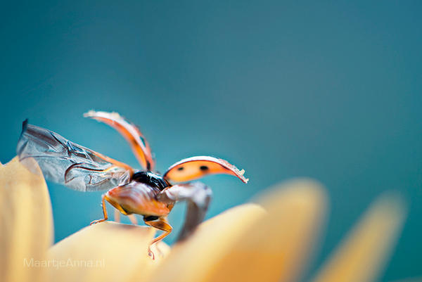 Fly away. by Annarigby