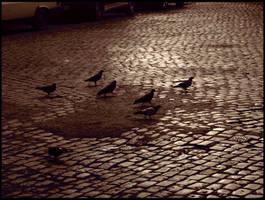Pigeon Race by caminopalmero