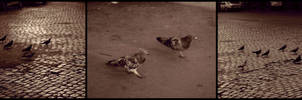The Race by caminopalmero