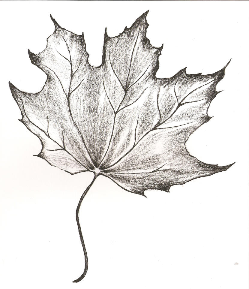 Drawing Red Lines With Green Ink : Maple leaf drawing by piemuncher on deviantart