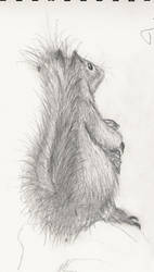 Squirrel, Classical Art Course by CaptainThomas