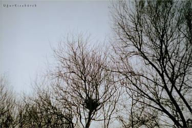 Nest by kisakureku