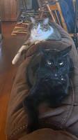 Emma And Brady The Cats 1
