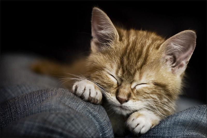 petite sieste by gwichin