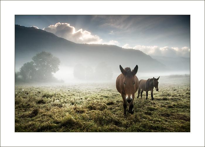 mulets by gwichin