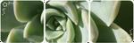 succulent divider by martha-chan