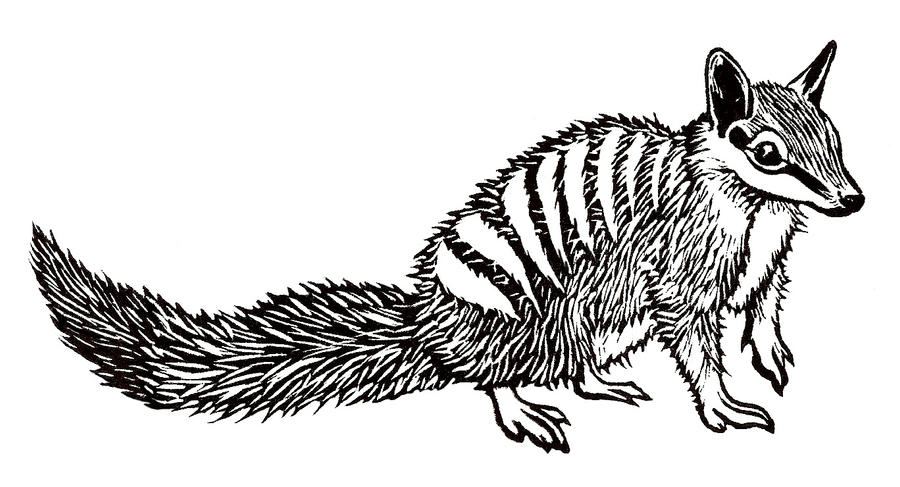 how to draw a numbat