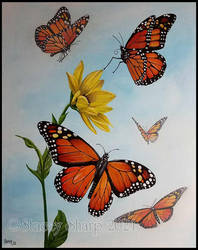 Butterfly series: #1-Monarch