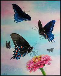 Butterfly Series: #2 Pipevine Swallowtail