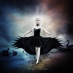 Black Swan by LorelainW
