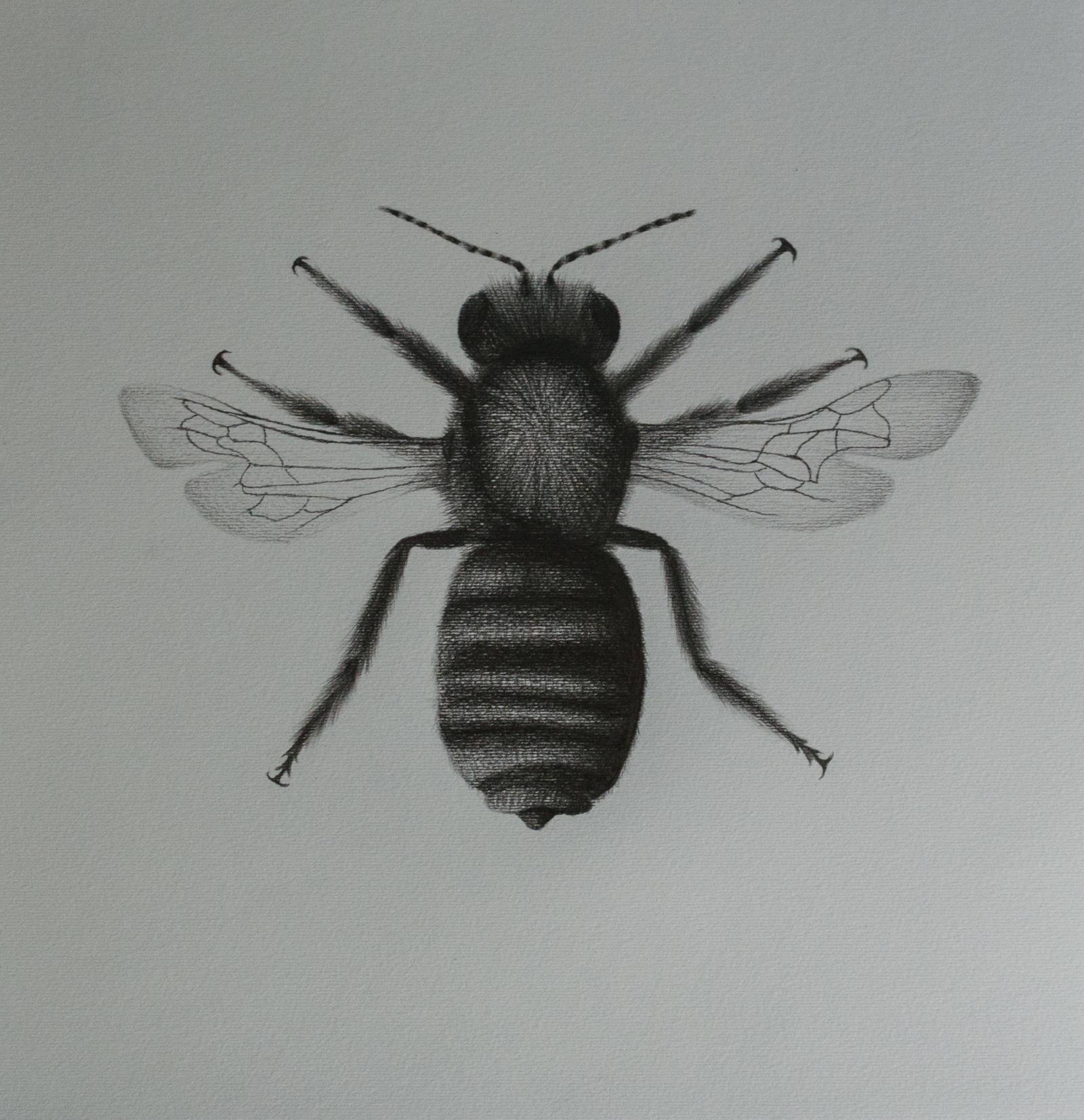 A bee
