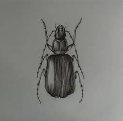 A scarab