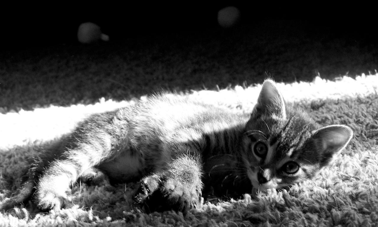 Sun Bathing by ycrad64