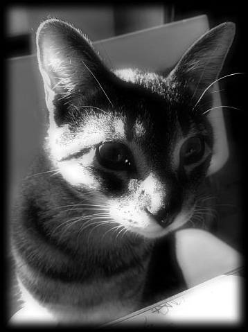 Fotogenic Feline by ycrad64