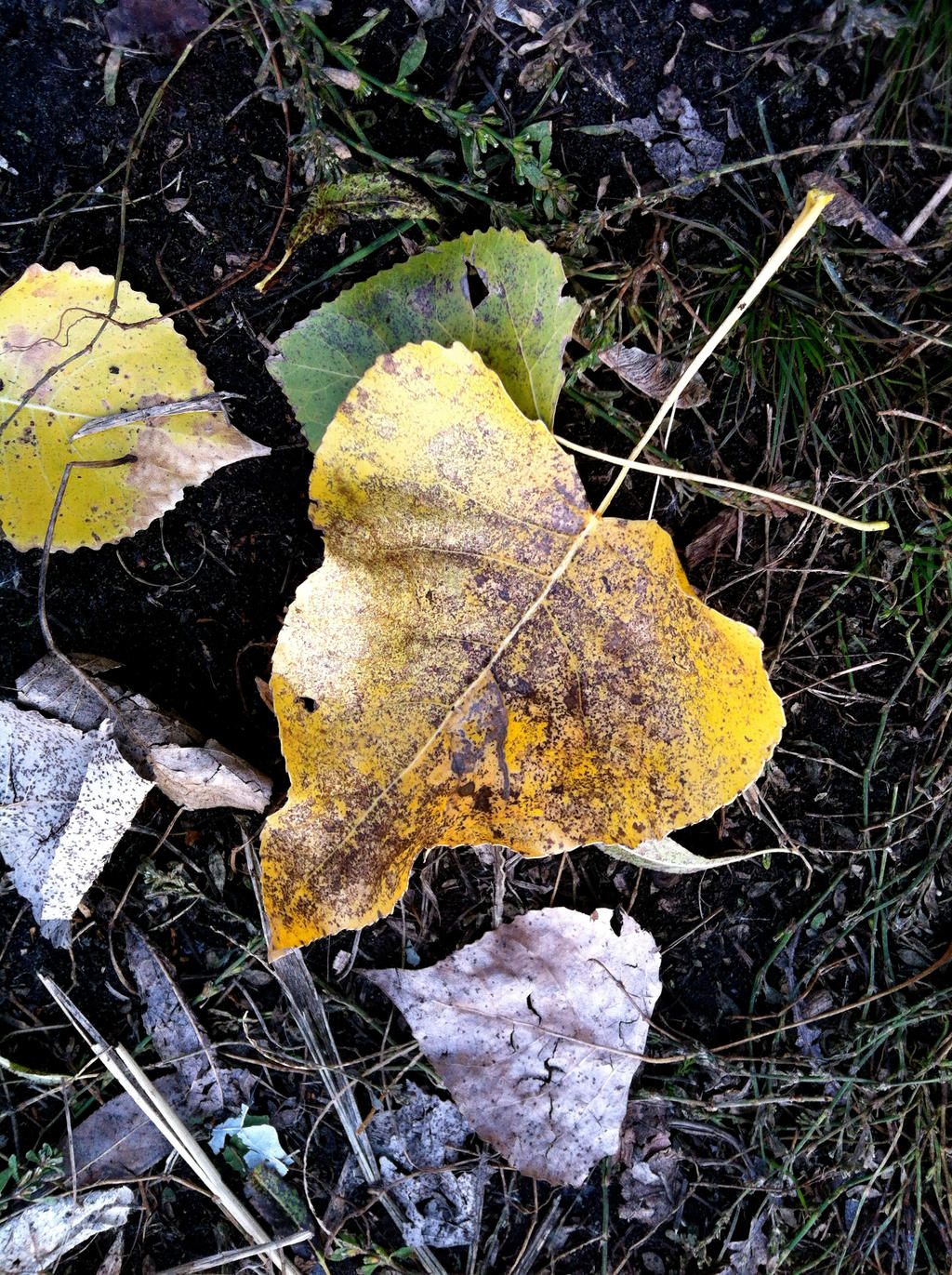 Fallen Leaf Detail by ycrad64