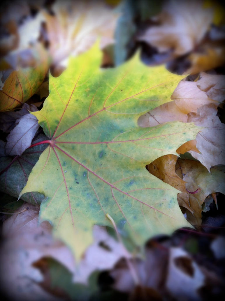 Gold and Green Leaf by ycrad64