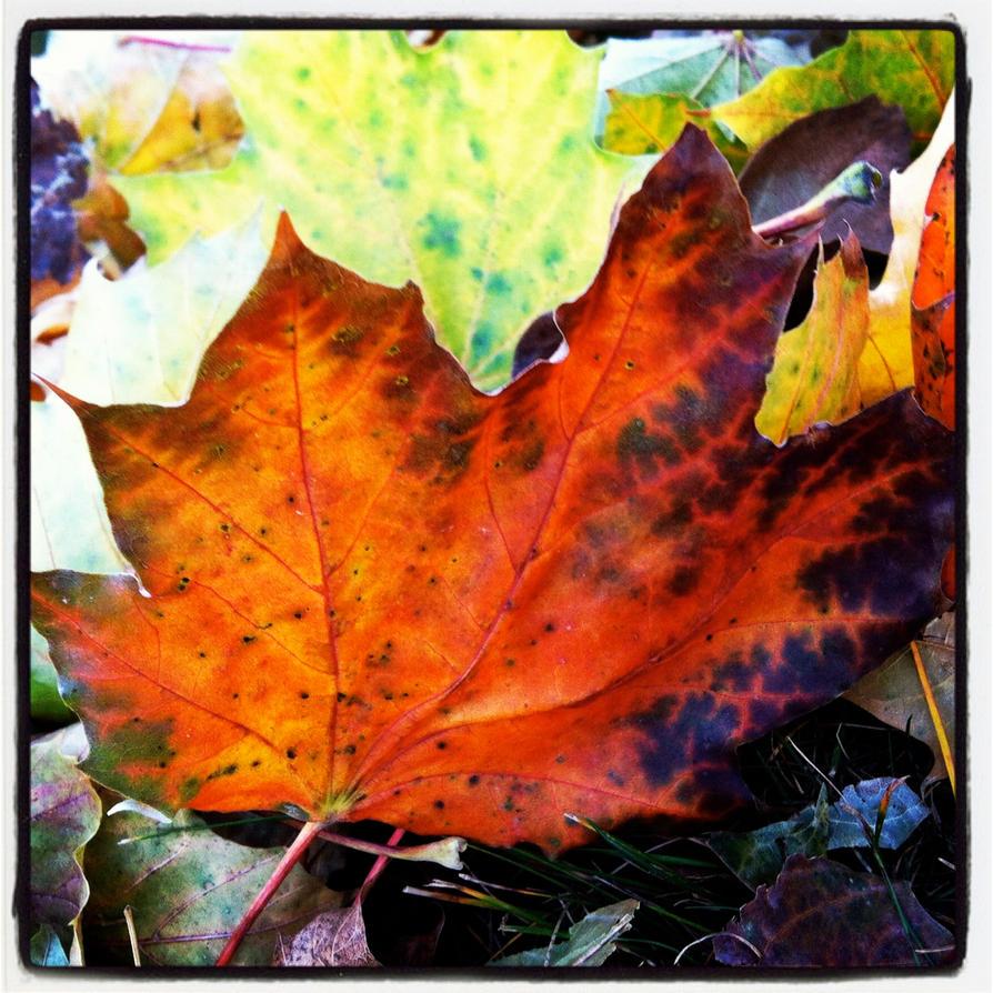 Orange Leaf With Green Edges by ycrad64
