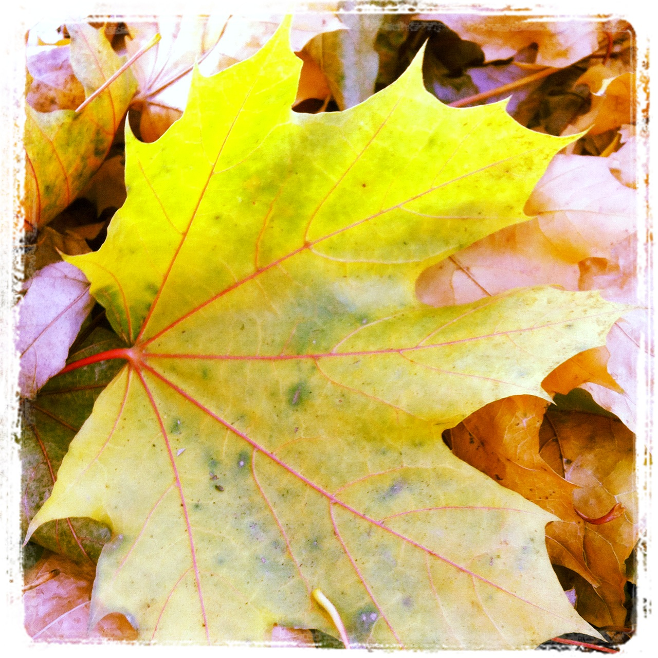 Glowing Yellow Leaf Detail by ycrad64