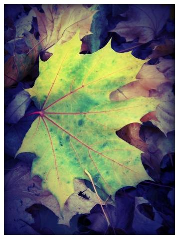 Singular Leaf by ycrad64