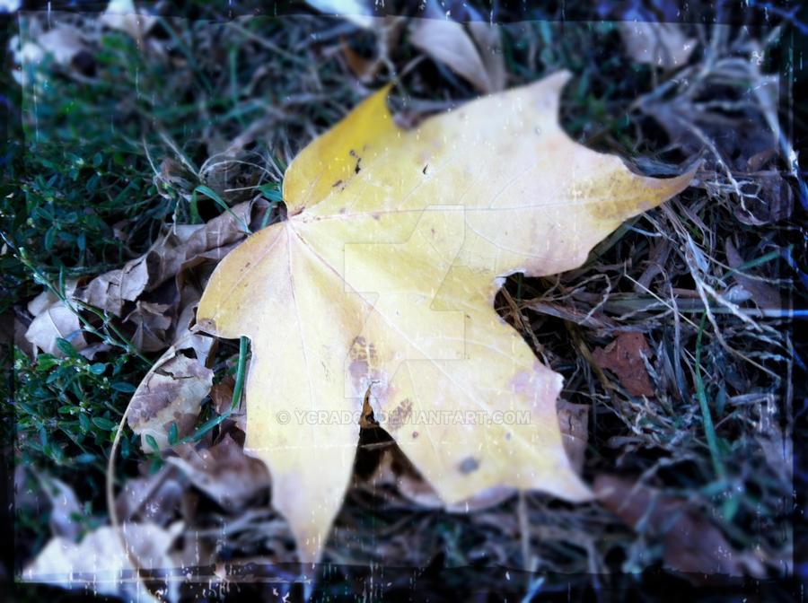 Leaf Detail by ycrad64