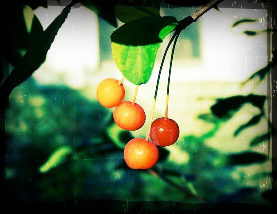 Tiny Apples by ycrad64