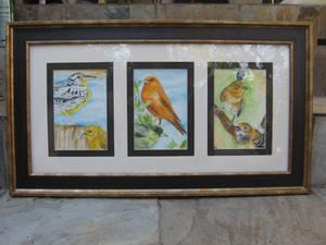 Three set of Many Birds.