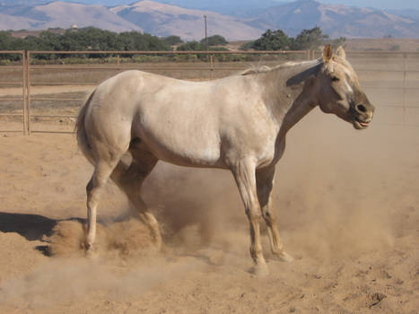 Appy mare stock 4