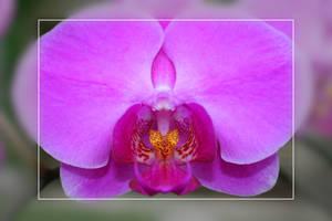 Orquidea 3 by freyes