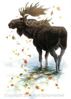 Moose Reflection