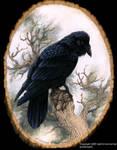 Raven Portrait no. 2