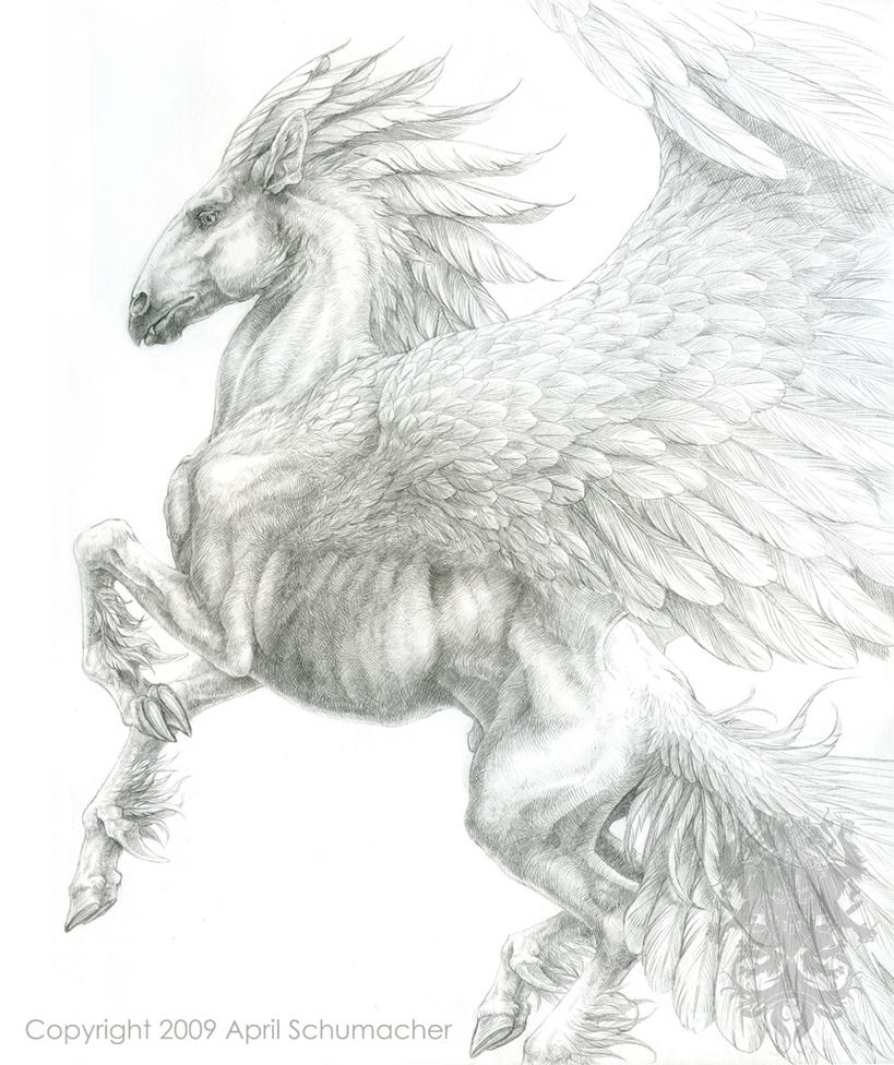 Pegasus surface anatomy study by pallanoph