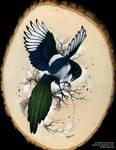 Resplendent Magpie