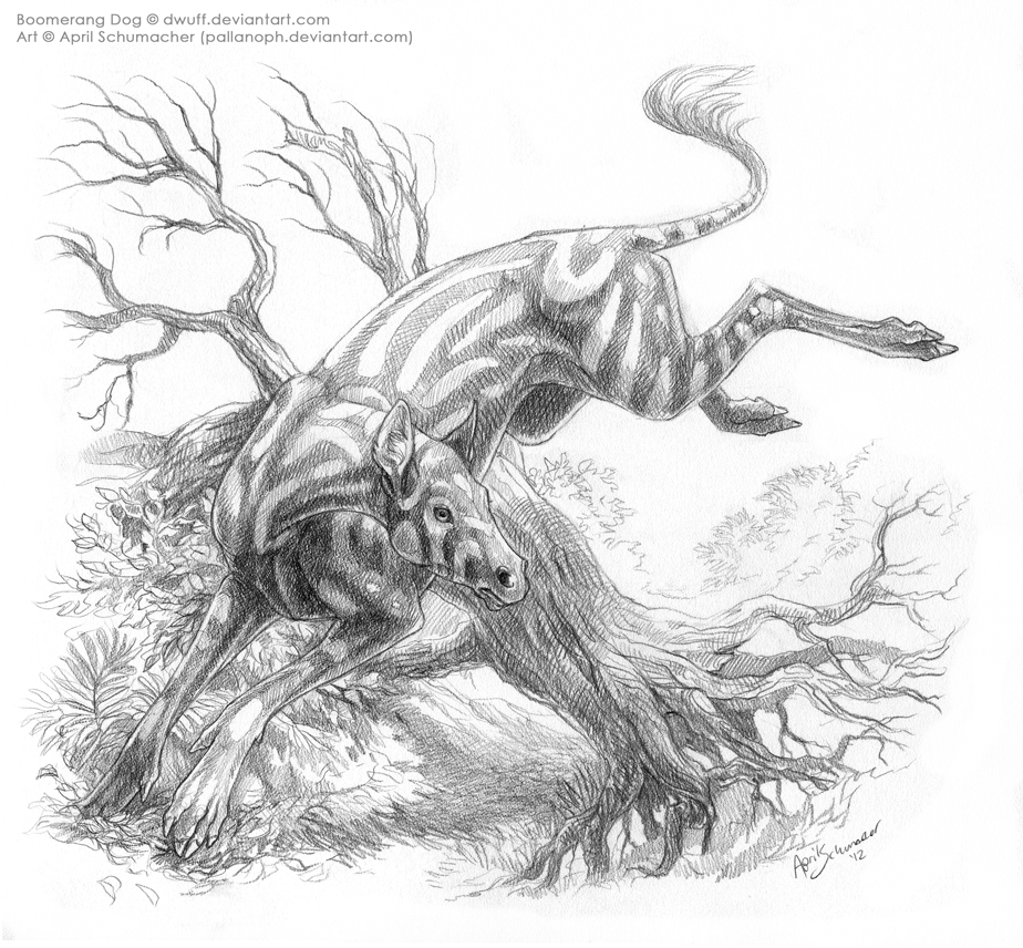 Boomerang Dog by pallanoph