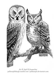 Bubo and Strix