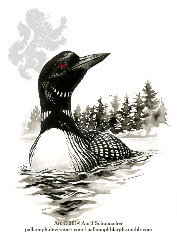 how to draw a loon bird