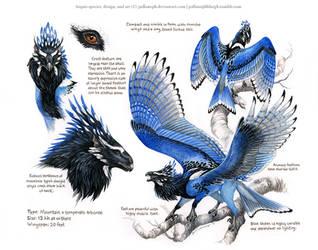 Custom Aequis: Steller's Jay