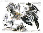 Custom Aequis: Grackle x Osprey