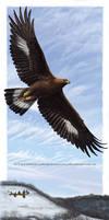 Golden Eagle: Over Winter Hill Prairie
