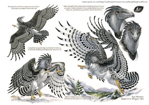 Custom Aequis: Mountain Harpy
