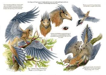 Custom Aequis: Mourning Dove
